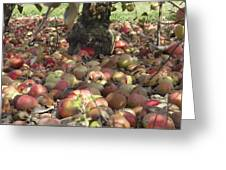 Carpet Of Apples Greeting Card