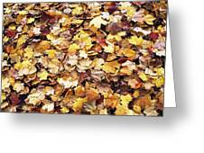 Carpet Of Leafs Greeting Card