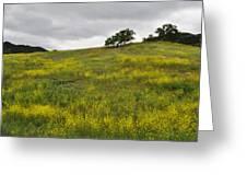 Carpet Of Malibu Creek Wildflowers Greeting Card