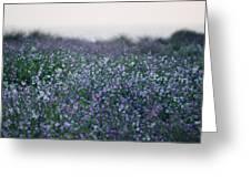 Carpinteria California Wildflowers Greeting Card
