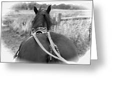 Carraige View Horse Greeting Card