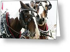 Carriage Horse - 2 Greeting Card
