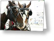 Carriage Horse - 3 Greeting Card