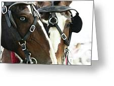 Carriage Horse - 4 Greeting Card