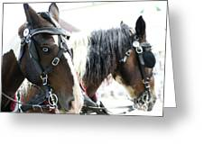 Carriage Horse - 5 Greeting Card