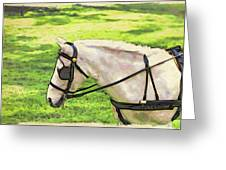 Carriage Pony Greeting Card