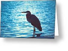 Carribean Light Greeting Card