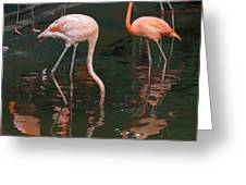 Cartoon - A Flamingo With Its Head Under Water In The Jurong Bird Park Greeting Card
