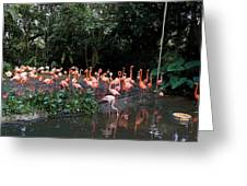 Cartoon - Flamingos In Their Exhibit Along With A Small Lake In The Jurong Bird Park Greeting Card