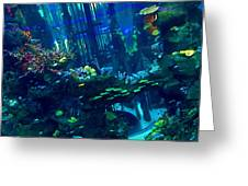 Casablanca Aquarium Close-up Greeting Card