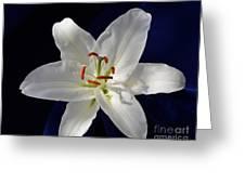 Casablanca White 0935 Greeting Card