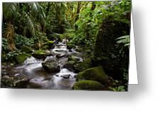Cascadas Of Boquete Greeting Card