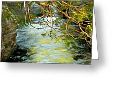 Cascade Cedar Greeting Card