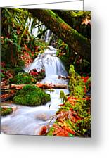 Cascade Creek Greeting Card by Randy Giesbrecht