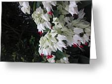 Cascade Of Flowers Greeting Card