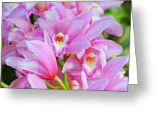 Cascade Of Pink Orchids Greeting Card
