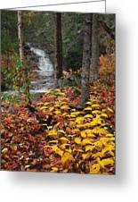 Cascade Creek  Autumn Greeting Card