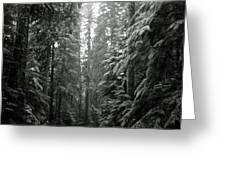 Cascade Snow Greeting Card