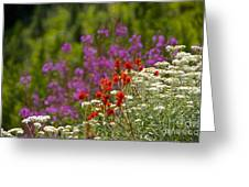 Cascade Wildflowers Greeting Card