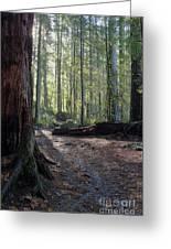 Cascades Forest Path Greeting Card
