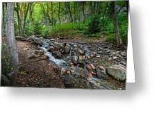Cascades Of The Forest Greeting Card