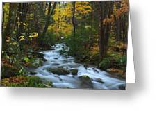 Cascades On The Motor Nature Trail Greeting Card
