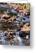 Cascading Autumn Leaves On The Miners River Greeting Card