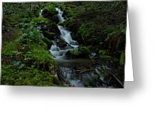 Cascading Brook In Mount Rainier National Park Greeting Card