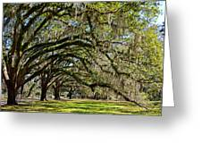 Cascading Oaks Greeting Card
