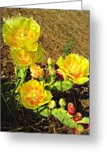 Cascading Prickly Pear Blossoms Greeting Card