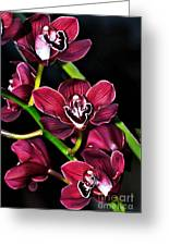 Cascading Red Orchids Greeting Card