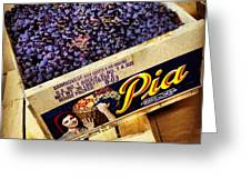 Case Of Sangiovese Grapes Greeting Card