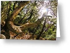 Castle Rock State Park Branch To The Sun Greeting Card