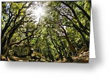 Castle Rock State Park Sun Rise Greeting Card