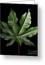 Castor Bean Leaf Greeting Card
