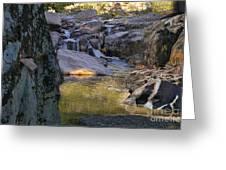Castor River Shut-ins Greeting Card
