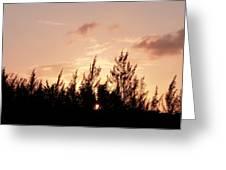 Casurina Sunset Greeting Card