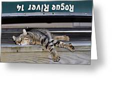 Cat And A Canoe Greeting Card