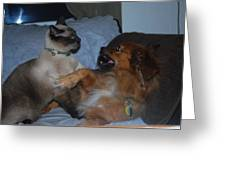 Cat And Dog Fight Greeting Card