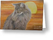 Cat And Sunset  Greeting Card