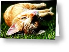Cat At Play Greeting Card by Jo Collins
