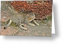 Cat At Wat Mahathat In 13th Century Sukhothai Historical Park-th Greeting Card