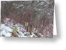 Cat Beauty Greeting Card