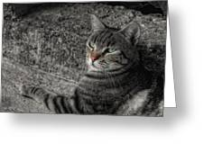 Cat Bicolored Greeting Card