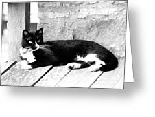Cat Black And White Greeting Card