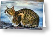 Cat By The Seaside Greeting Card