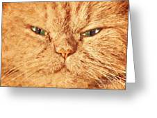 Cat Face Close Up Portrait. Painted Effect Greeting Card