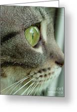 Cat Face Profile Greeting Card