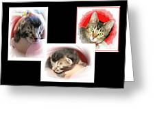 Cat Family Greeting Card