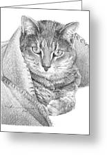 Cat In A Blanket Pencil Portrait  Greeting Card